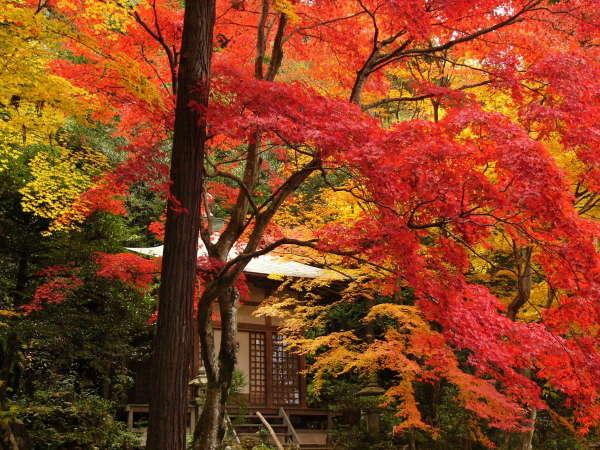 【筑波山の紅葉】当館から70km、約1時間半。11月上旬から中旬が見頃