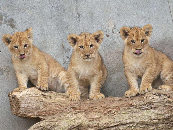 【かみね動物園】当館から37km、かみね公園内にあります。レジャーランドもあり楽しめます