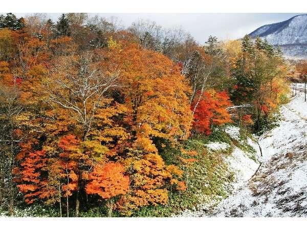 【秋のオロフレ山】カルルス温泉の紅葉は、赤や黄色の他に白も加わります。