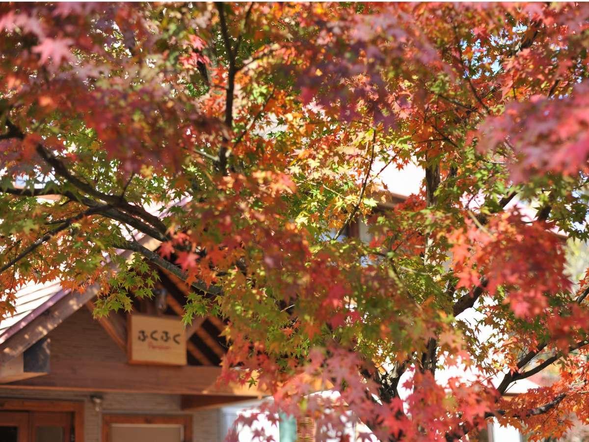 11月中旬 庭の紅葉が見頃です♪