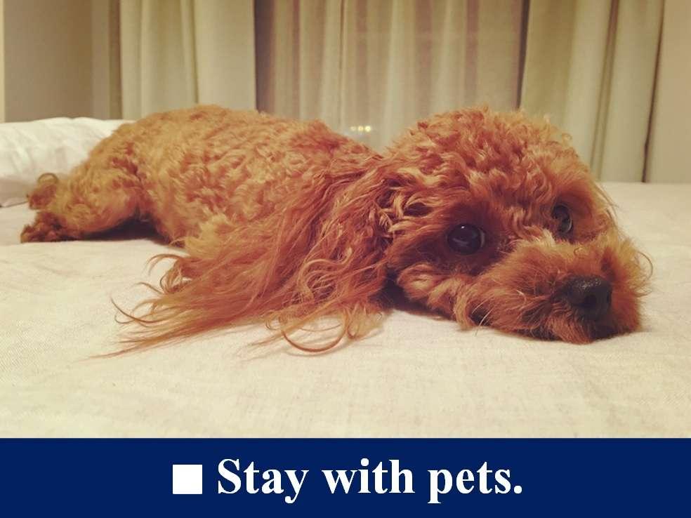 ■【別棟ツインルーム】*ペット宿泊可。愛犬も立派な家族。広々37平米のお部屋でペットとお泊り。