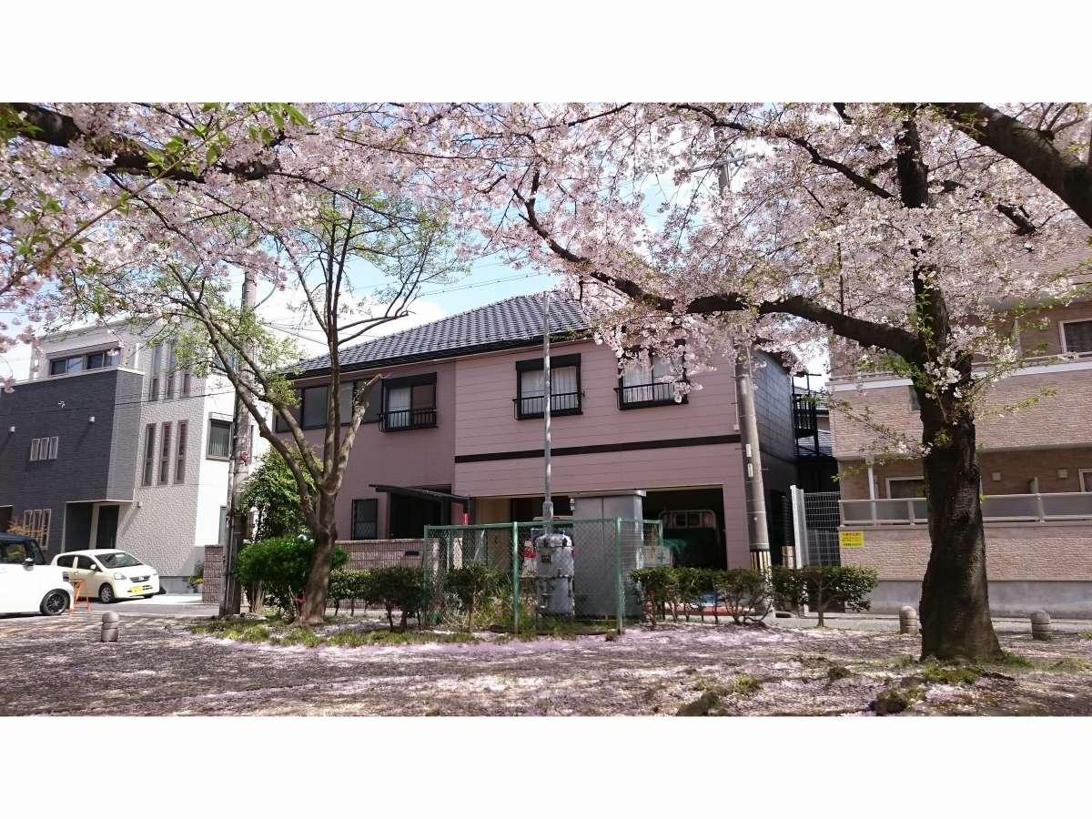 外観、桜の季節、目の前の公園から
