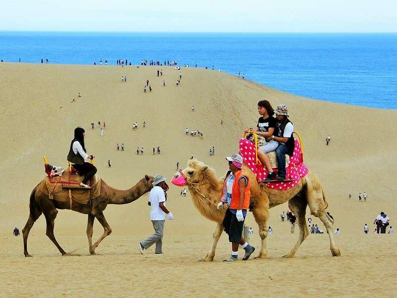 「らくだ」に乗って鳥取砂丘を満喫しています!