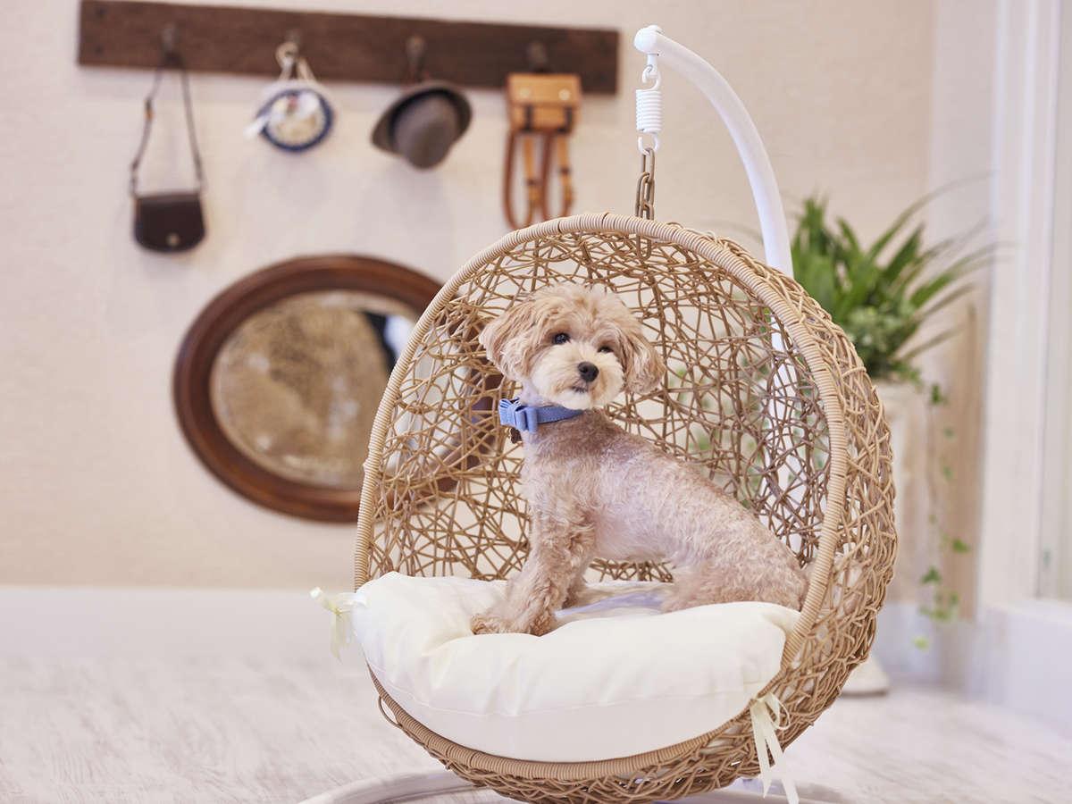 【屋内ドッグサロン】ミニ写真館のわんちゃん用小物で、普段も可愛いけれど、さらに可愛く写真が撮れます♪
