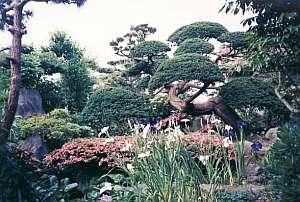 金沢屋旅館:「和」を感じる庭