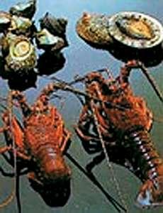 磯料理・海辺の湯の宿平鶴(ひらつる)