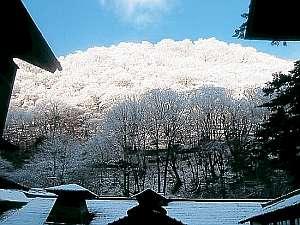 春が近づき木々が樹氷に