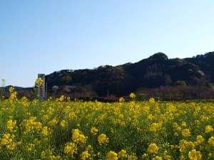 季一遊:春の香りいっぱいの菜の花畑