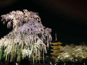 やっぱり春は桜でしょう!!