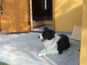 藤ヶ鳴別荘 四季のかばん:わんわん棟玄関前でのんびりお昼寝