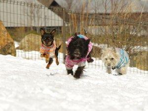 エンゼルフォレスト那須白河 (旧:羽鳥湖高原レジーナの森):【愛犬用施設】愛犬と一日中遊んでも遊びつくせない愛犬用施設がいっぱいです。