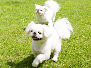 エンゼルフォレスト那須白河 (旧:羽鳥湖高原レジーナの森):愛犬と一緒に楽しめる施設が満載の複合リゾート!愛犬ともっと仲良くなれるリゾートを目指しています。
