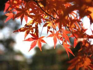 常磐ホテル:紅葉スポット多数!ぶどう狩りや秋の味覚に舌鼓!
