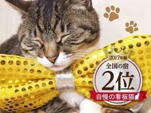 天童温泉 松伯亭 あづま荘:自慢の看板猫ランキング2位!