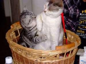 猫のいるお宿 プチホテル・フロマージュ