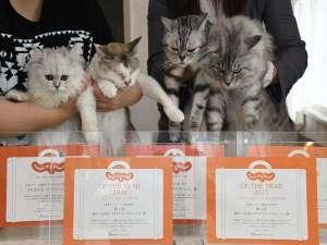 猫のいるお宿 プチホテル・フロマージュ:たくさんのじゃらんアワード頂きました!
