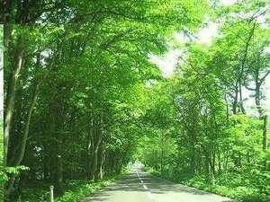 緑のトンネル。むせかえるような緑があふれる十和田湖畔。運が良ければ可愛い小鳥や動物たちにも会えるかも