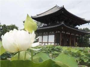 ビジネス旅館やまべ:喜光寺 蓮の花 8月が見頃