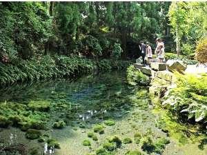 南阿蘇・高原の家 ノア:車で3分の日本名水百選「白川水源」。阿蘇火口まで25分、高千穂まで1時間、熊本空港まで40分。