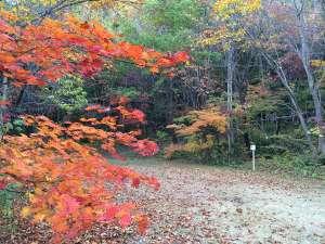 秋の紅葉山公園は世阿弥も愛したと言われる隠れた名所です。