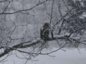 冬場に池の魚を見つめる鷲?鷹?