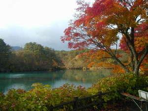 花きりん:五色沼の紅葉②