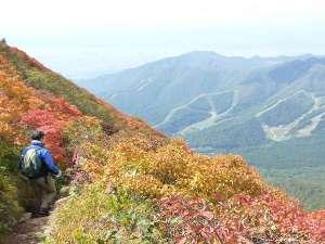 花きりん:磐梯山の紅葉②