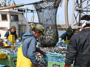 宿のすぐ下の漁港で水揚げされた魚介類を仕入れています。