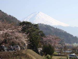 湖風の宿 あさふじ:【お花見】河口湖での桜は例年4月中旬頃が見ごろです。写真は当館近くで撮影
