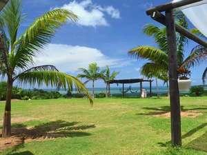 西表島モンスーン:ヤシの木とハンモック