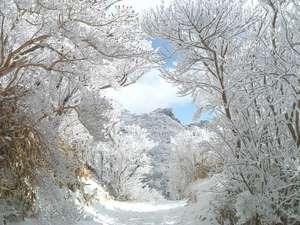 白濁源泉掛け流し八湯めぐりの湯 民芸モダンの宿 雲仙福田屋:【冬の雲仙】幻想的な光を放つ仁田峠の霧氷。自然の美しさに圧倒されます。(1,2月に数日雪が積ります。)