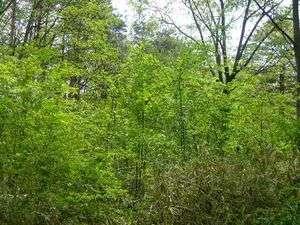 那須の自然が生み出す新緑!やわらかい色合いと息吹が心地いい!