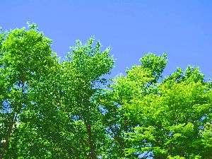 緑溢れるベストシーズン!
