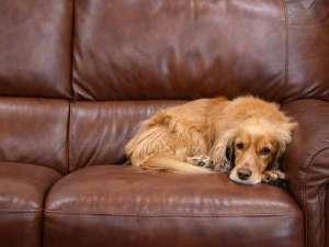 ロッヂ B&W:*ペットと泊まれる宿。旅先でもおうちでくつろいでいるような感覚で過ごせます。