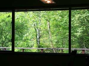 森のペンション リトルフット:大きな窓の外は新緑の海