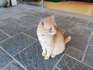 看板猫のガーちゃんです!玄関、フロント付近にて、やる気が出たときだけお出迎え致します。