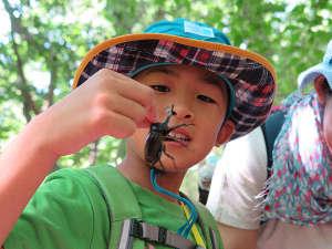 ホテルサンバレー那須:夏限定のスペシャル自然体験!ちびっこパック♪カブトムシ捕り