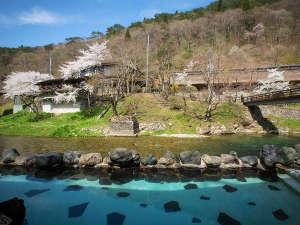 千二百年の湯めぐり 大沢温泉 賢治ゆかりの自炊部「湯治屋」 :例年4月後半に桜が咲きます!花見露天風呂お楽しみください!
