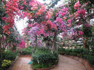 「福岡市動植物園」はホテルすぐそば
