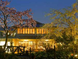 萩城三ノ丸 北門屋敷:【3月下旬~4月中旬】春のガーデンには数種類の桜が次々と咲き誇ります。