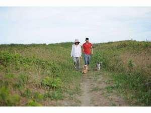 海の音:海岸までの小道は絶好の散歩道