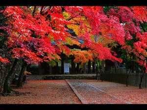 ビジネスホテルタカラ:☆ 永源寺総門と紅葉