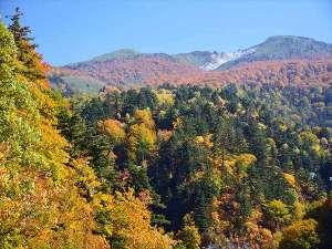 日本の山岳温泉リゾート 新玉川温泉:玉川大橋より紅葉の焼山を望む