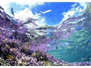 ホテル ライジングサン宮古島:新城(アラグスク)の海