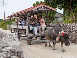 高那旅館:*【水牛車観光】三線を弾きながら、島内の美しい町並みをの~んびり案内してくれます♪