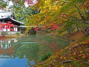 【高台寺】美しい臥龍池や庭園で京都の風情をお楽しみください。