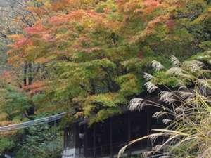 柏屋旅館:紅葉の季節の巌風呂へは錦に飾られたもみじやススキの中を歩いてどうぞ