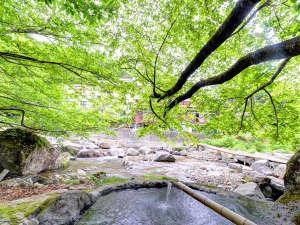 二岐温泉柏屋旅館 :*野天風呂/春は新緑、夏は涼風、秋は紅葉、冬には雪見風呂がお楽しみ頂けます。
