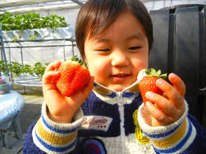 伊香保温泉 旅館 ふくぜん:【春の味覚】大人気いちご狩りは1月〜5月まで