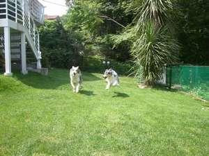 愛犬の宿 ラブリーワンズ:ベランダから下りると芝生のラン